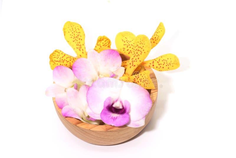 Close up da orquídea amarela e roxa no backgr de madeira do branco do copo imagens de stock royalty free