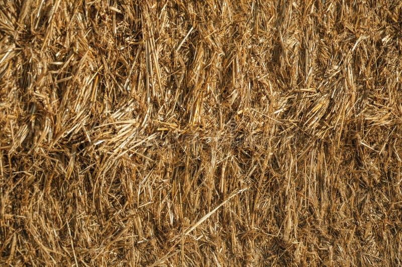 Close-up da palha de um pacote de feno em uma exploração agrícola fotos de stock royalty free