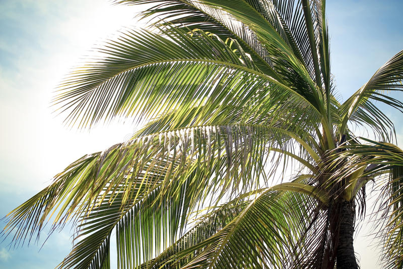 Close up da palma foto de stock