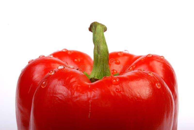 Close-up da paprika vermelha fotos de stock royalty free
