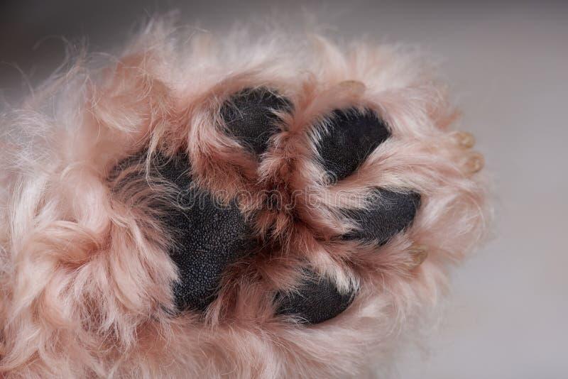 Close-up da pata do cão fotografia de stock royalty free