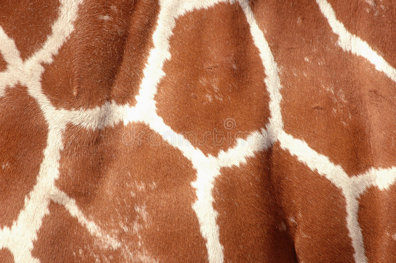 Close up da pele do Giraffe imagem de stock