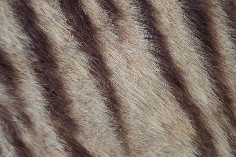 Close up da pele do tigre imagem de stock royalty free
