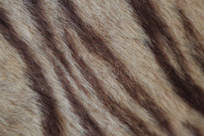 Close up da pele do tigre fotografia de stock royalty free