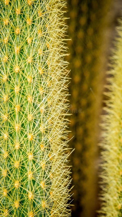 Close up da planta do cacto com pontos afiados foto de stock