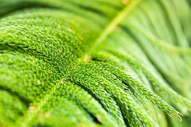 Close up da planta tropical imagens de stock