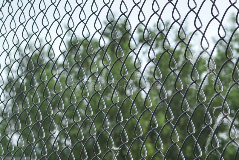 Close-up da rede da malha do metal Rabitz Fim acima Fundo Abstrac??o Rede da malha na perspectiva em um fundo verde como a foto de stock