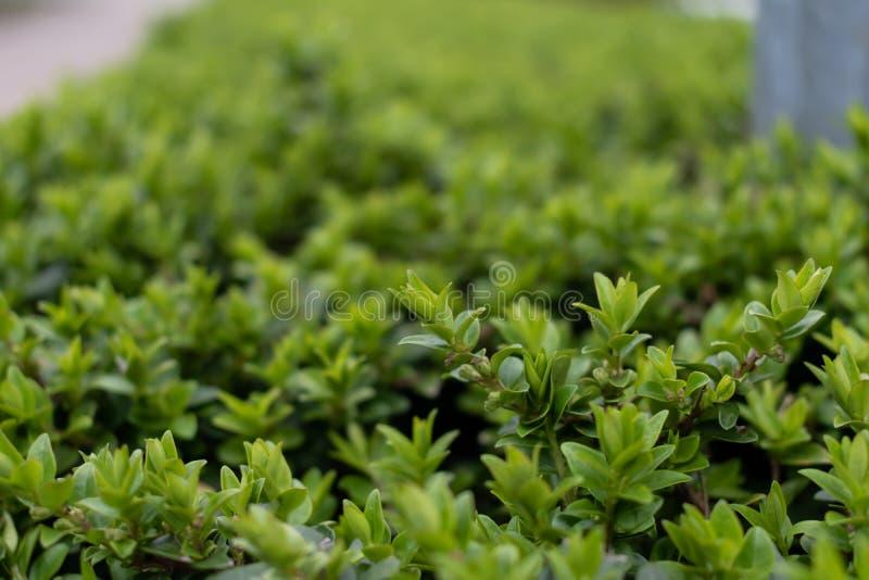 Close-up da samambaia verde foto de stock