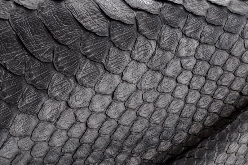 Close up da textura da serpente do réptil, imagem do pitão do snakeskin do ziguezague da forma foto de stock royalty free