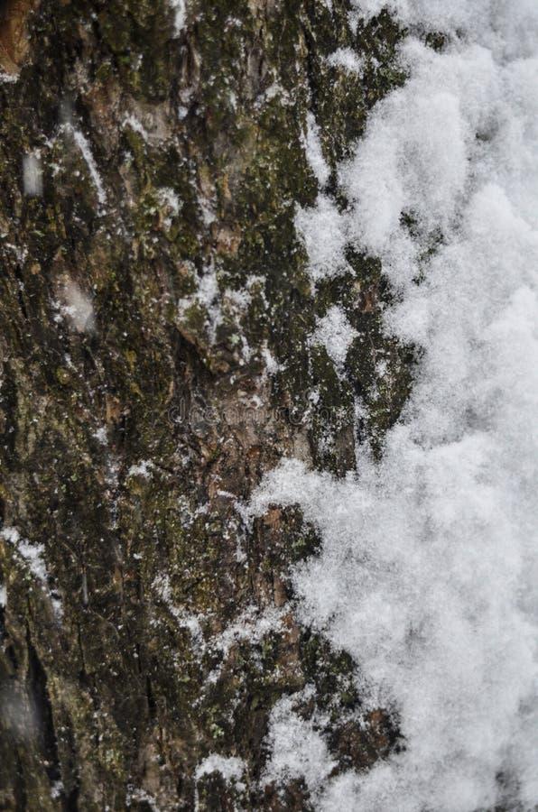 Close-up da textura de uma casca de árvore coberto de neve com um fundo macio fotos de stock royalty free