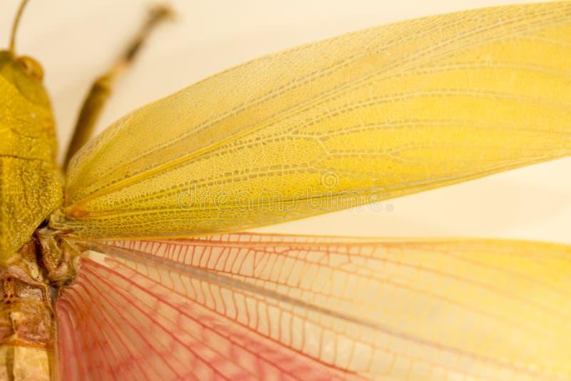Close-up das asas do ` um s da borboleta foto de stock royalty free