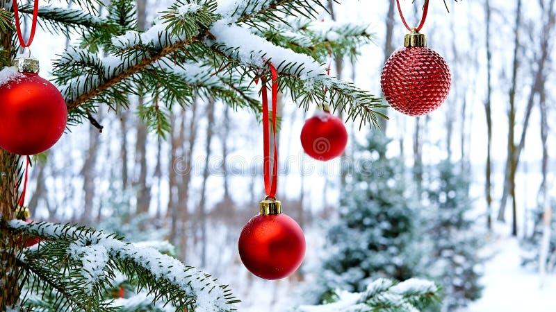 Close-up das bolas vermelhas das quinquilharias do Natal que penduram em ramos de pinheiro cobertos de neve fora fotografia de stock