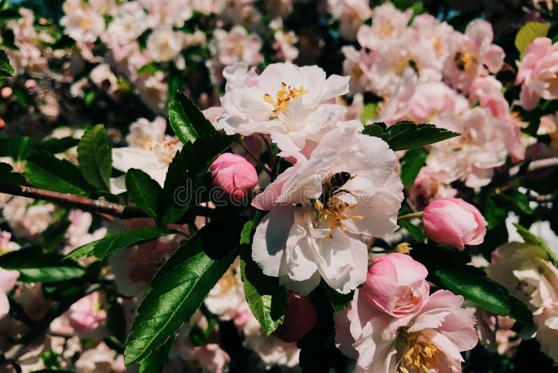 Close up das flores cor-de-rosa imagem de stock royalty free