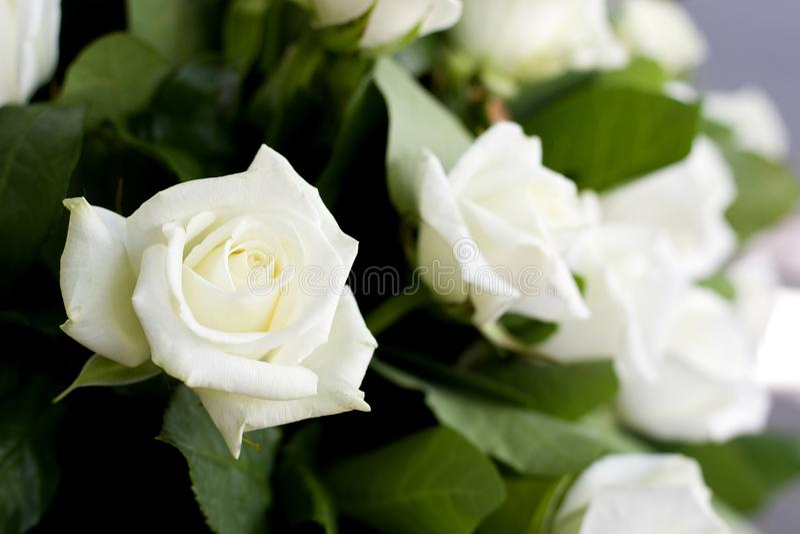 Close-up das rosas brancas na cesta Um ramalhete de rosas brancas bonitas em uma cesta de vime foto de stock royalty free