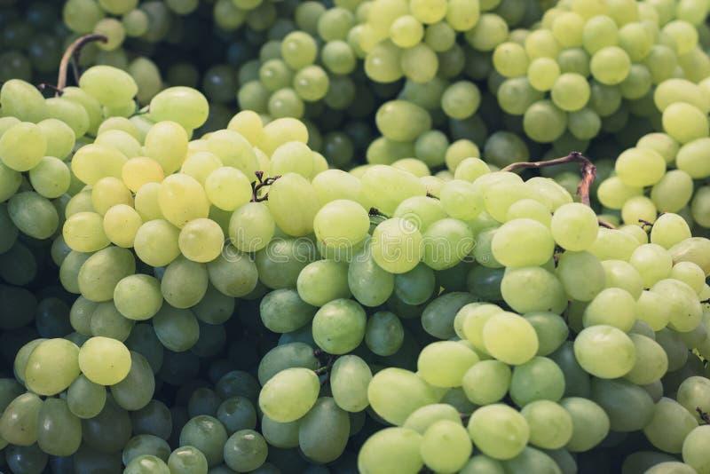 Close up das uvas - bonch de uvas verdes imagens de stock