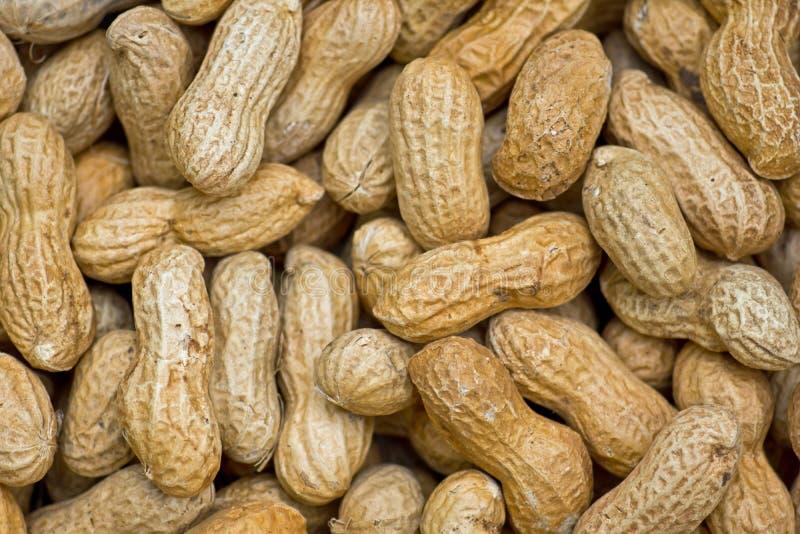 Close up de alguns amendoins fotografia de stock