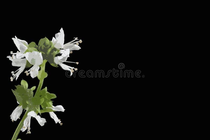 Close-up de Basil Flower contra o fundo do pacote ilustração stock