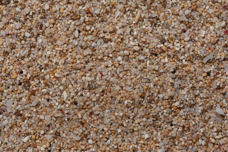 Close-up de Extream à areia do flinders do coral e do shell foto de stock