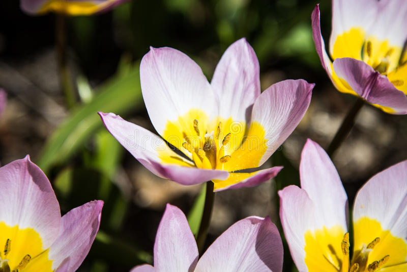 Close up de florescência da flor foto de stock