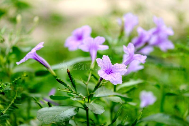 Close-up de kleine violette bloemen met vele groene bladeren in de tuin stock afbeeldingen