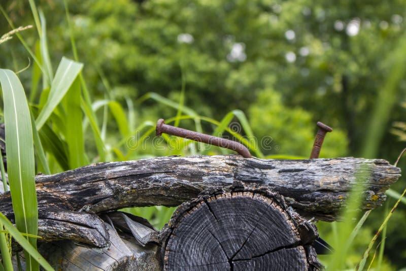 Close up de logs velhos com os pregos oxidados gigantes na terra com a erva daninha do bokeh e fundo intensamente verdes da árvor foto de stock