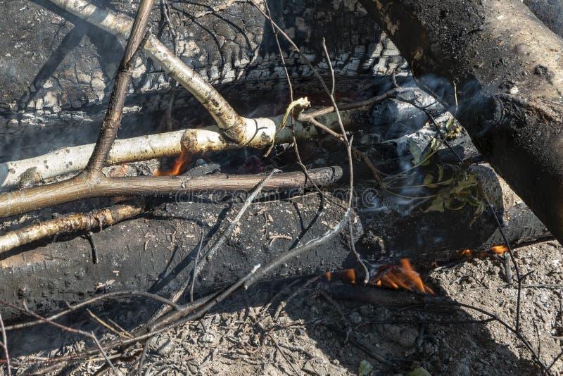 Close-up de madeira queimado dos logs Construa um fogo imagens de stock