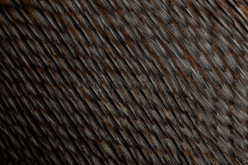 Close-up de penas do pinguim de Humboldt fotos de stock