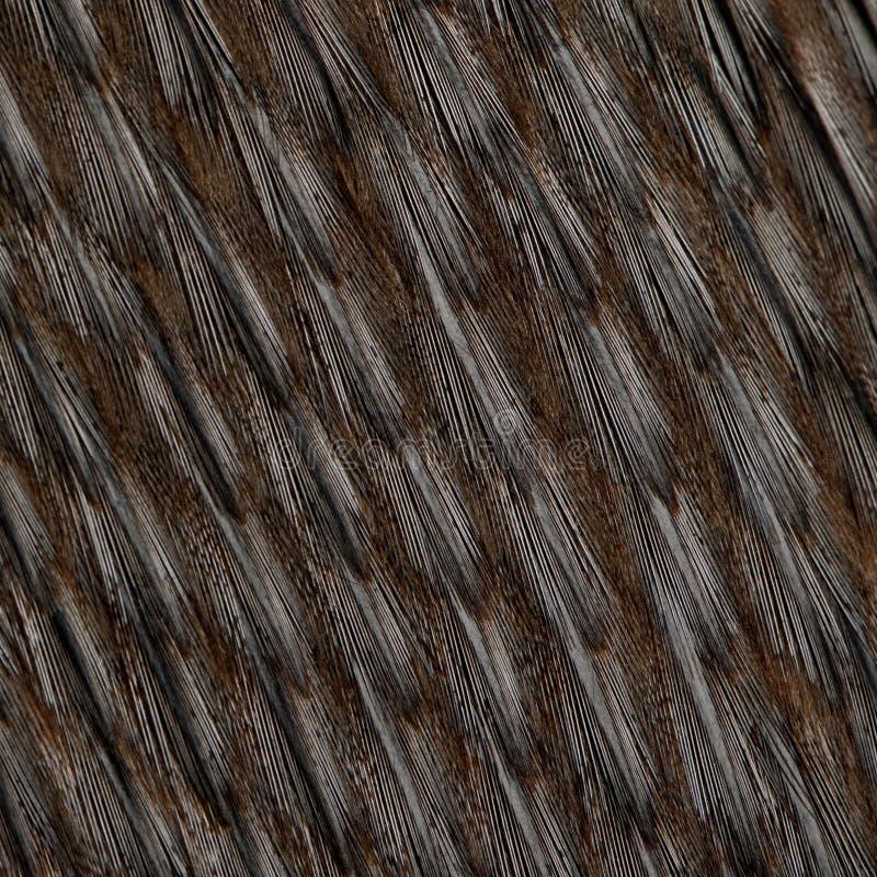 Close-up de penas do pinguim de Humboldt fotografia de stock royalty free