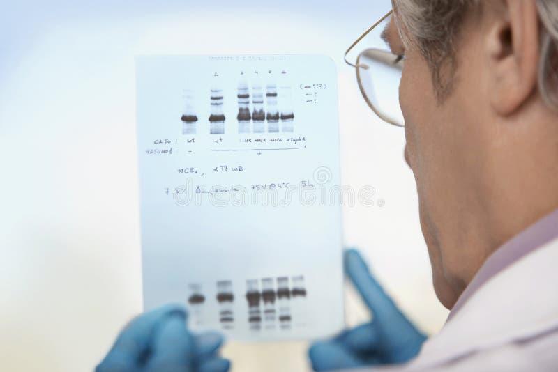 Close up de resultados da análise do ADN de Looking At do cientista imagens de stock