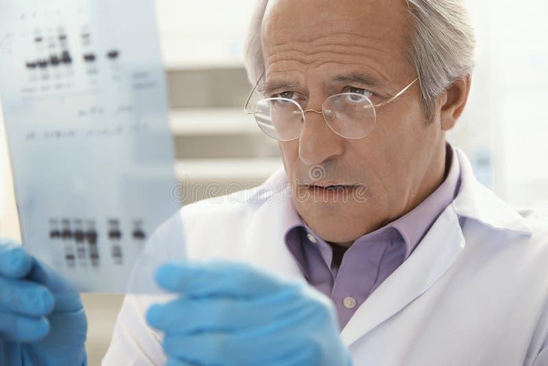 Close up de resultados da análise do ADN de Looking At do cientista foto de stock