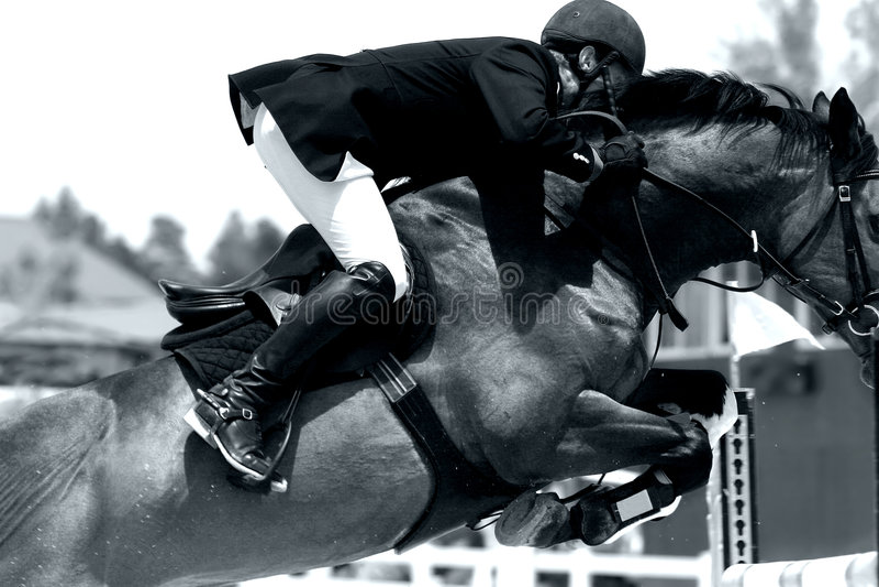 Close-up de salto da mostra equestre (BW) foto de stock