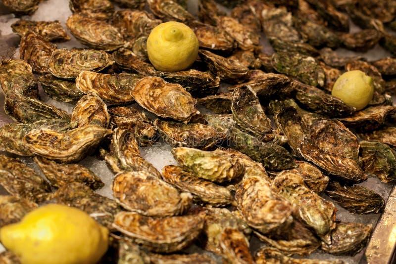 Close-up de shell selados de ostras frescas, mentira do limão em uma bandeja no mercado O conceito de um piquenique Marisco luxuo fotos de stock royalty free
