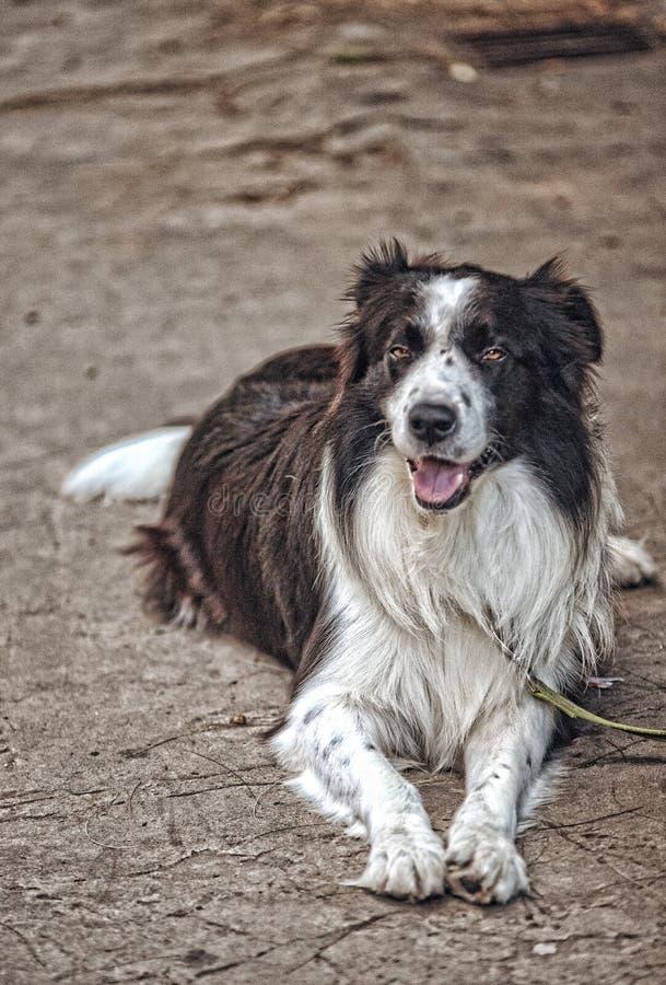 Close up de um cão que coloca na terra no parque fotografia de stock