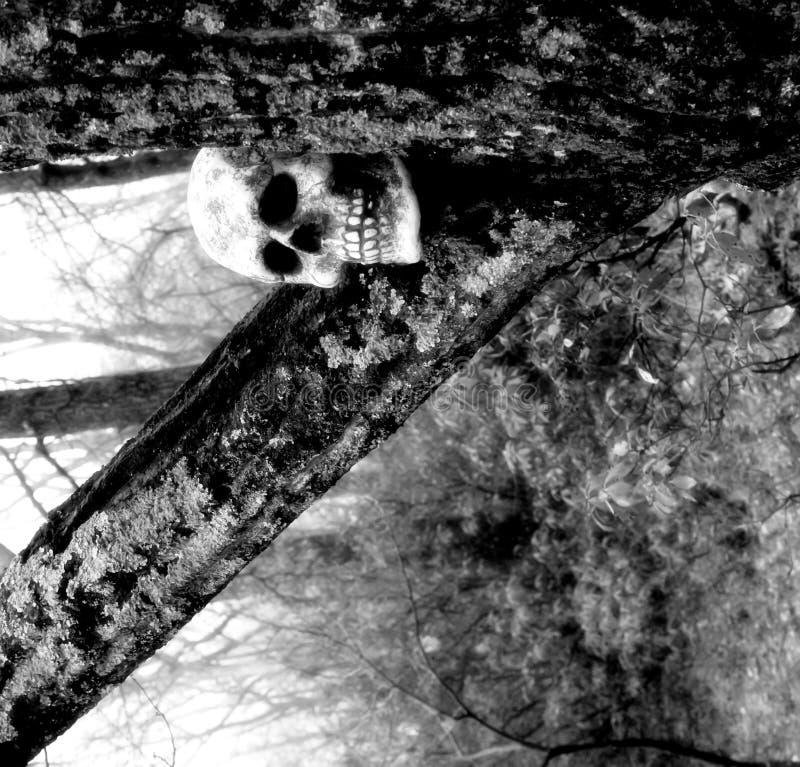 Close up de um crânio fotografia de stock