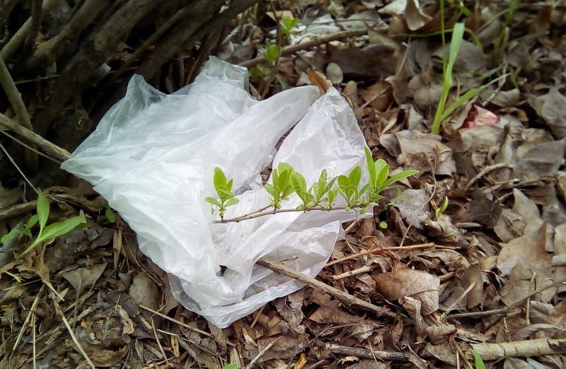 Close-up de um galho com os tiros verdes entrelaçados com um saco de plástico branco imagens de stock