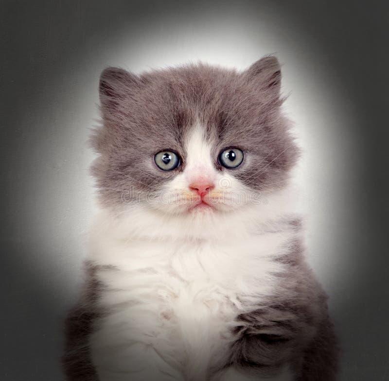 Close-up de um gatinho fotografia de stock royalty free