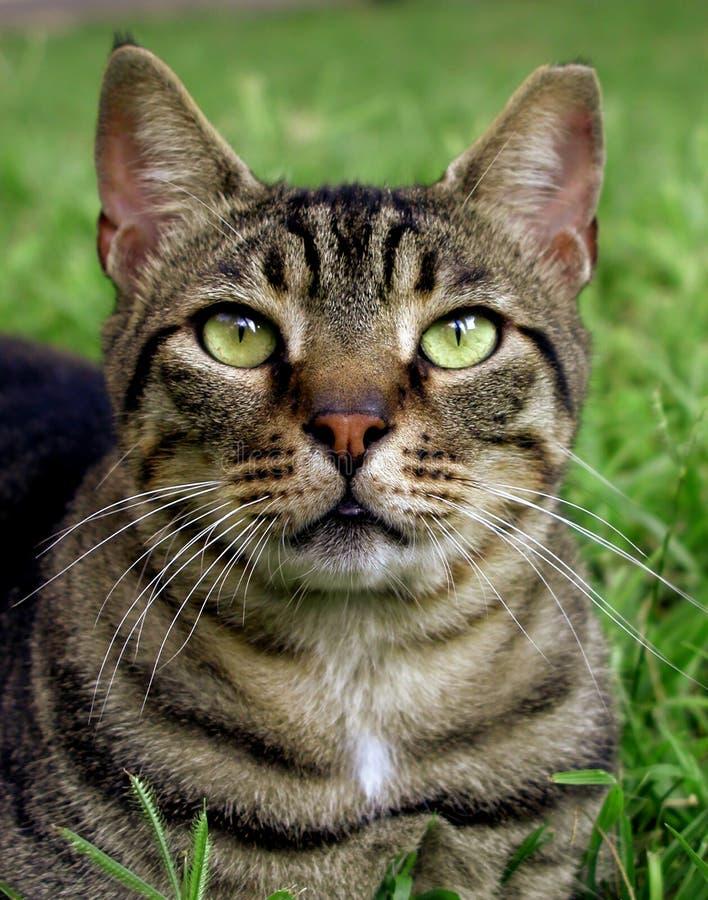 Close up de um gato foto de stock