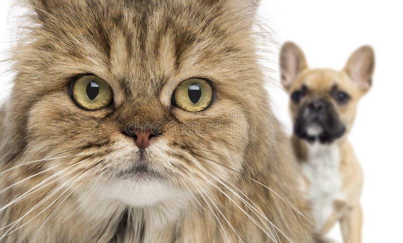 Close-up de um gato e de um cão que escondem atrás, isolado fotografia de stock
