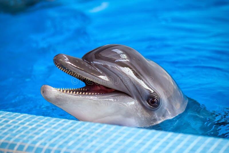 Close-up de um golfinho cinzento fotos de stock