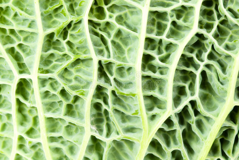 Close-up de um kale fotografia de stock
