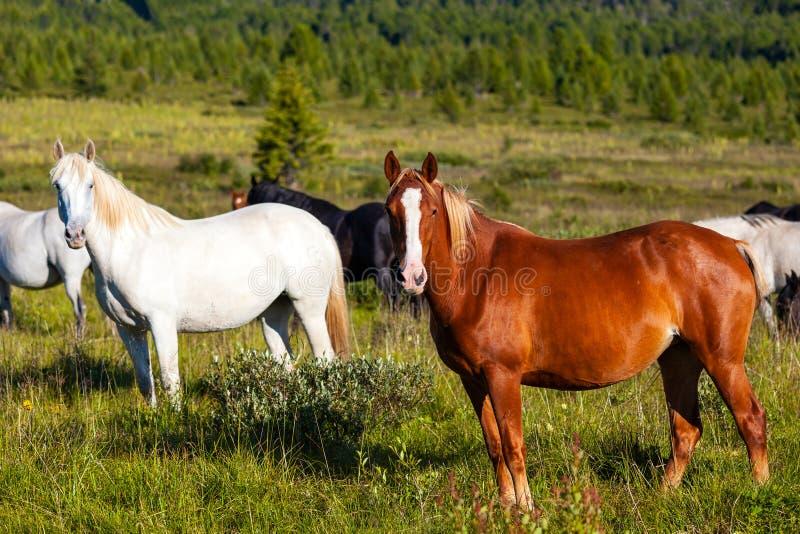 Close-up de um rebanho dos cavalos fotografia de stock