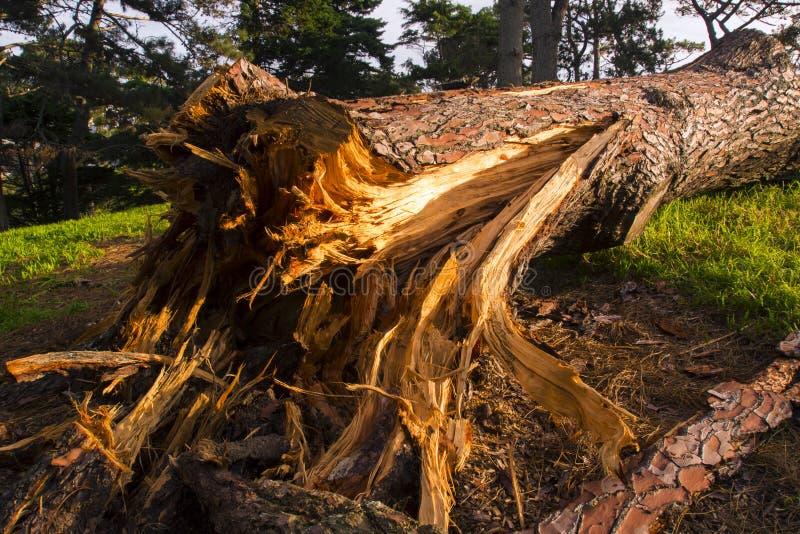 Close-up de uma árvore quebrada fotos de stock
