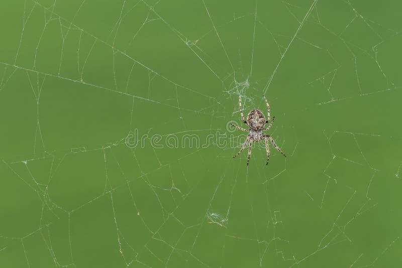 Close up de uma aranha transversal em sua Web de aranha fotos de stock