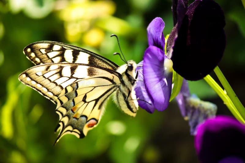 Close up de uma borboleta imagens de stock royalty free