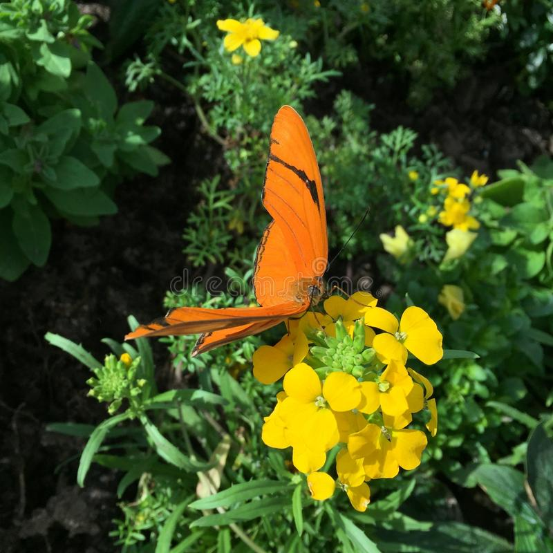 Close up de uma borboleta alaranjada fotografia de stock royalty free