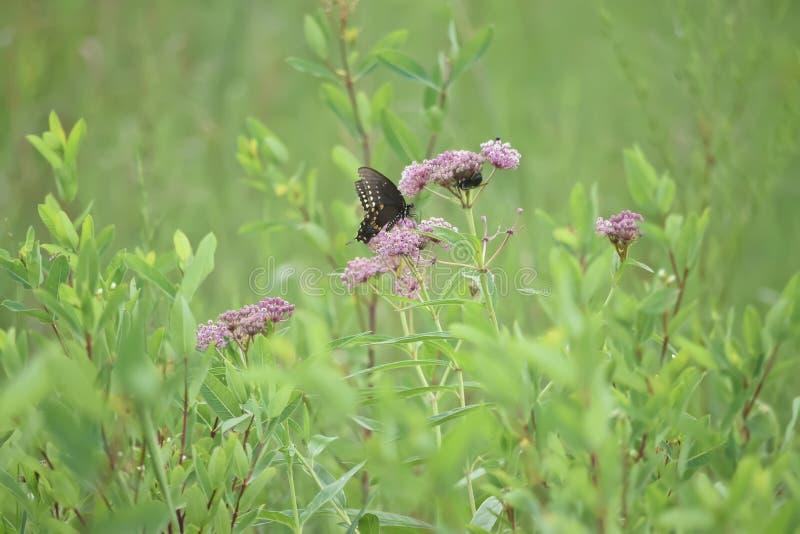Close-up de uma borboleta e de uma flor foto de stock royalty free