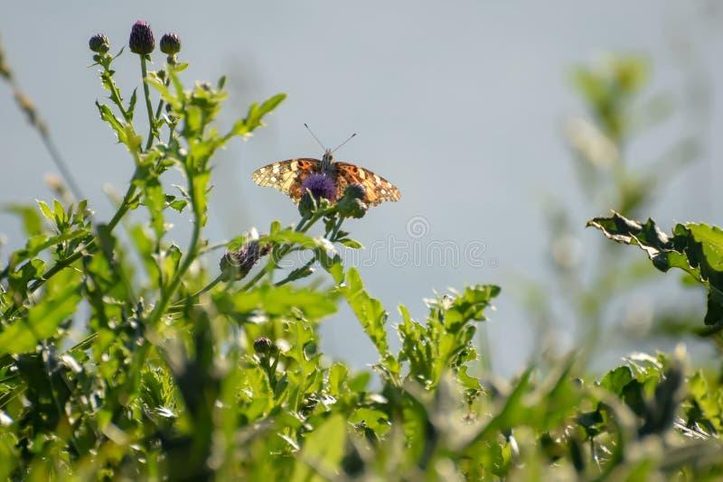 Close-up de uma borboleta e de uma flor imagem de stock royalty free