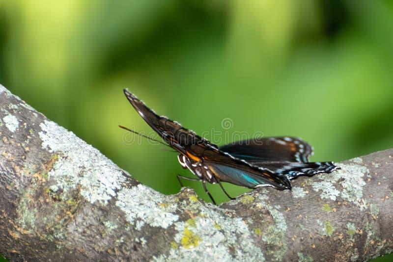 Close-up de uma borboleta empoleirada em uma folha imagem de stock royalty free