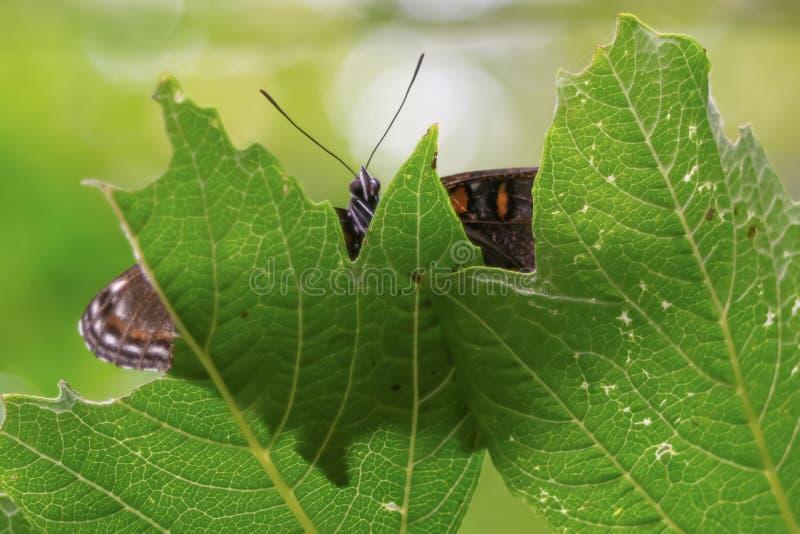 Close-up de uma borboleta empoleirada em uma folha fotos de stock royalty free