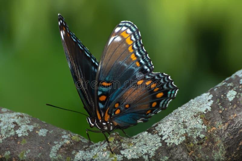 Close-up de uma borboleta empoleirada em uma folha fotografia de stock royalty free